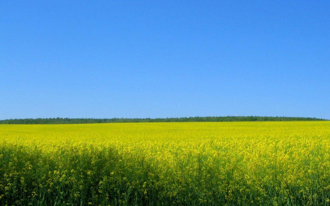 Biopolttoaineissa on potentiaalia